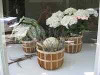 Elixir Feng Shui Window White Hydrangea