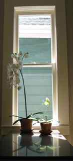 Elixir's Feng Shui- Green Orchid Faces Window
