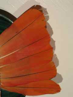 Feang Shui Parrot Feathers