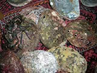 Tiburon Art Festival- Abalone Shells