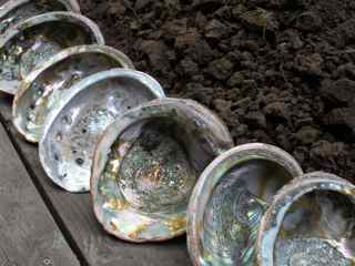 Tiburon Art Festival- Abalone Shells, Earth and Wood