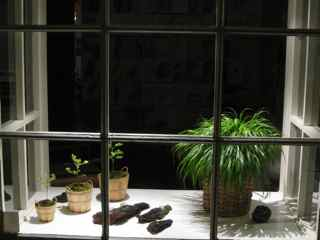 Elixir of Belvedere-Tiburon Feng Shui Window 13