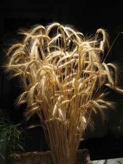 Elixir Feng Shui Window 4- Wheat Macro